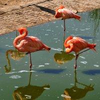 четыре фламинго) :: Дмитрий Цымбалист