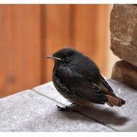 oiseau. :: Энни Герей