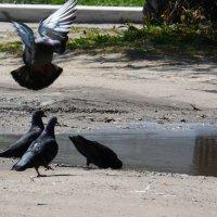 Посадка голубя :: Александр Маркин