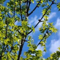 Небо сквозь зелень :: Александр Маркин