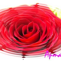 вдохновляющая роза! :: Оля Артамкина