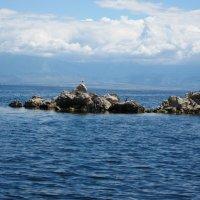 Змеиный остров :: Инна .Дашевская