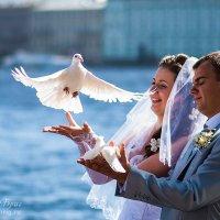 Голубь любви :: Владимир Бриг