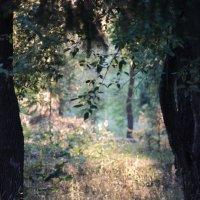 Сказочный лес... :: Альбина Хамидова