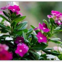 Балконные цветы :: Александр Гапоненко