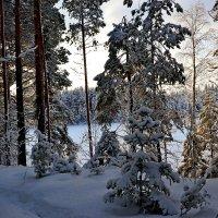 зимний день :: Елена Третьякова