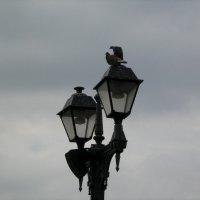 голуби :: Анастасия Коробейникова