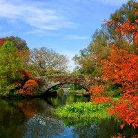 Центральный парк в Нью-Йорке. :: Galina Kazakova