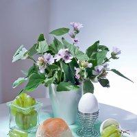 Завтрак с виноградом. :: Лилия *