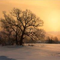 Winter MORNING :: Виктор Перякин