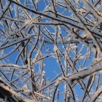 Зима :: Анна Сидорова