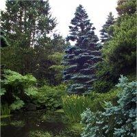 Прогулки в ботаническом саду - 8. :: Аркадий Голод