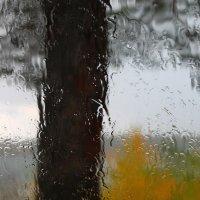 дождь :: Анна Сидорова