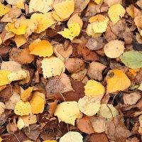 Осень :: Анна Сидорова