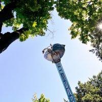 Пролетая над гнездом кукуша :: Павел Сущёнок