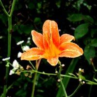 flower :: Софья Рыбина