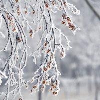зимняя сказка :: Светлана Тимченко
