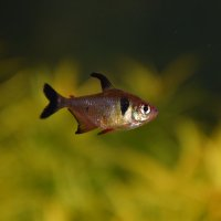 Рыбка) :: Катерина Клаура