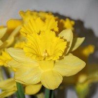 Весенний мажор... :: Tatiana Markova