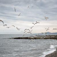 Чайки :: Алексей Петренко
