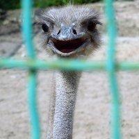 Здрасьте- это я! :: Ираида Мишурко