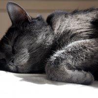 Сладкий сон на столе. На солнышке. :: Валерия  Полещикова