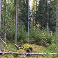 В лесу. :: zoja