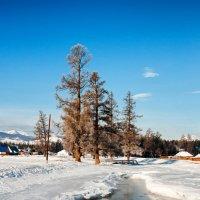 Горный Алтай. Зимний пейзаж. :: Александр Поборчий