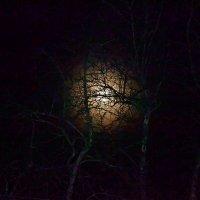 Лунный свет. :: Михаил Столяров