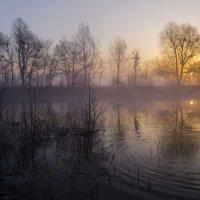 Про утро и туман :: Сергей Корнев