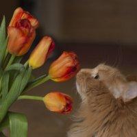 кошка и цветы :: Анна Городничева