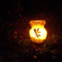 Вечерняя подсветка-3 :: Регина Пупач