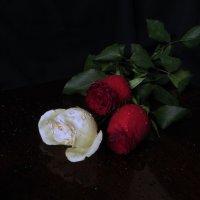О розах :: Наталья Джикидзе (Берёзина)