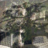 В тени деревьев тянет к преступленью... :: liudmila drake