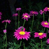 В ночном садочке стоят цветочки.. :: Клара