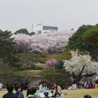 Японская весенняя действительность... :: Алекс Аро Аро