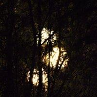Три луны??? :: Марина