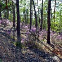 Сказочный лес :: Ольга