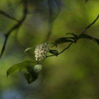 Весна :: Алексей Коган
