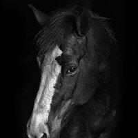 Портрет Родительской лошадки :: Алексей Румянцев