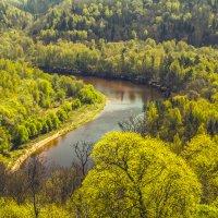 И скоро лес будет таким! :: Gennadiy Karasev