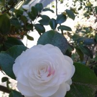 Японская роза :: Дарья Сапфирова