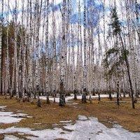 Пахнет прошлым прошлогодняя листва... :: Лесо-Вед (Баранов)