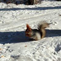 Возьму про запас ! :: Мила Бовкун