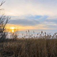 На закате у сухой осины. :: Владимир M