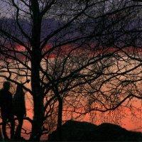 мой черный день Весны :: liudmila drake
