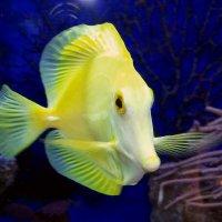 Рыбка по имени Ванда :: Vladimir Lisunov