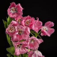 Тюльпаны :: Светлана Л.