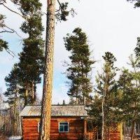 Зимовье на оз.Гузэн :: Александр Ефремов