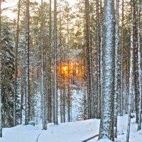 в таёжном лесу :: Елена